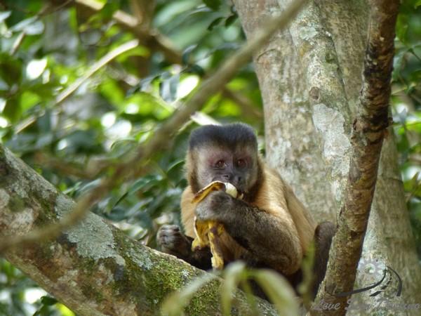 agua mineral - parque nacional de brasilia - parque nacional de brasilia - piscinas - o que fazer em brasilia - macaco