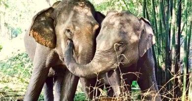 o-que-fazer-em-chiang-rai-tailandia-Elephant Valley Thailand