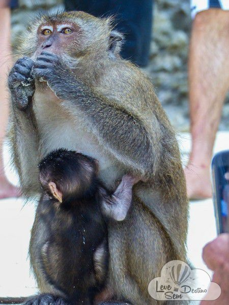 motivos para viajar para a tailandia - natureza