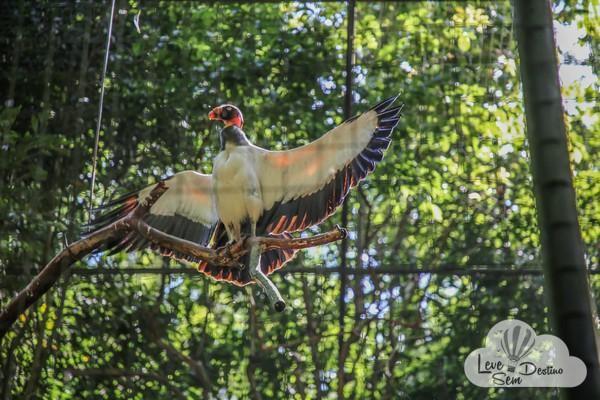 parque das aves - foz do iguacu - cataratas - parana - preservacao - mata atlantica (50)