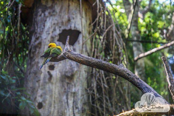 parque das aves - foz do iguacu - cataratas - parana - preservacao - mata atlantica (17)