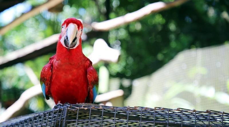 parque-das-aves-foz-do-iguacu-cataratas-parana-preservacao-mata-atlantica
